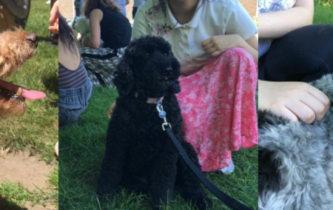 Students and Staff Receive Canine Therapy before Finals