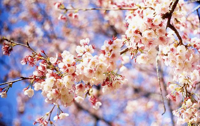 #Stressless: Spring Break