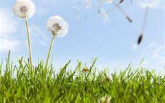 Seasonal Allergies: A Spring Epidemic