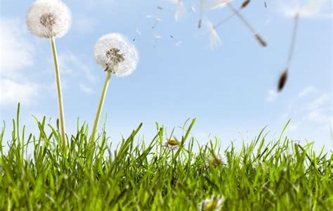 Seasonal Allergies: A Spring Epidemic