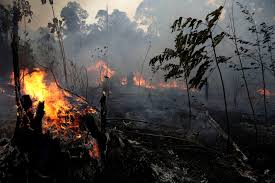 Devastating Fires Rip Through the Amazon