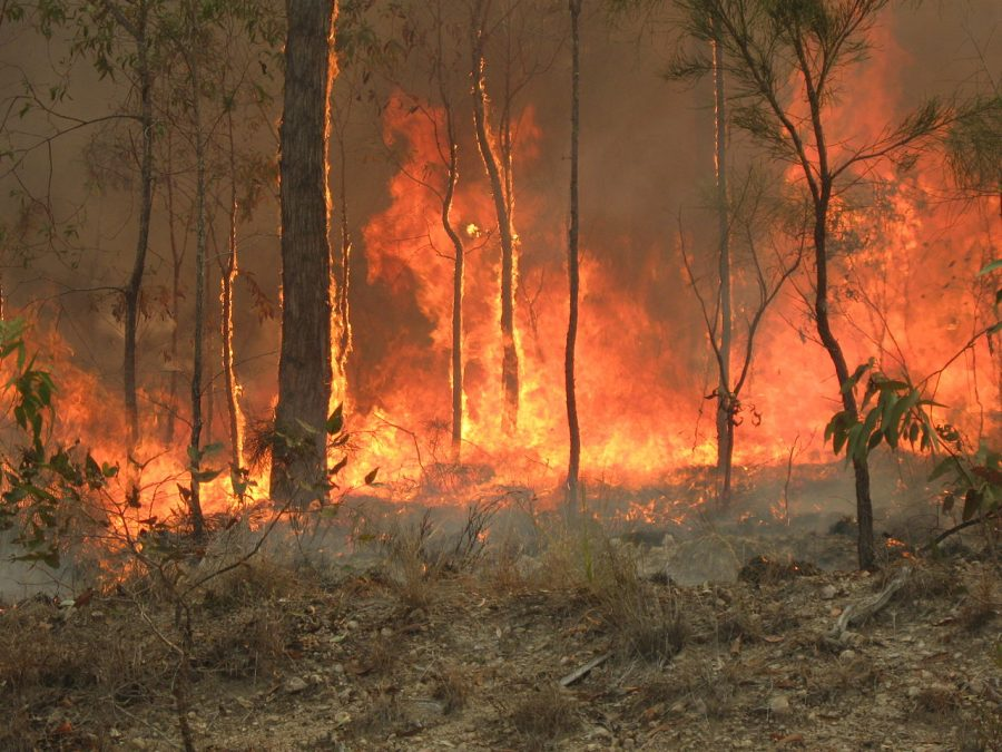 Brushfire in Queensland, Australia Photo:  Wikimedia