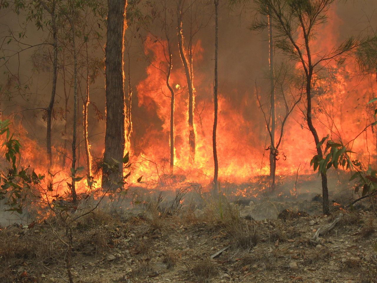Brushfire in Queensland, Australia Photo:  Wikimedia