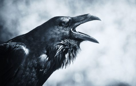The Raven at Tenafly High School