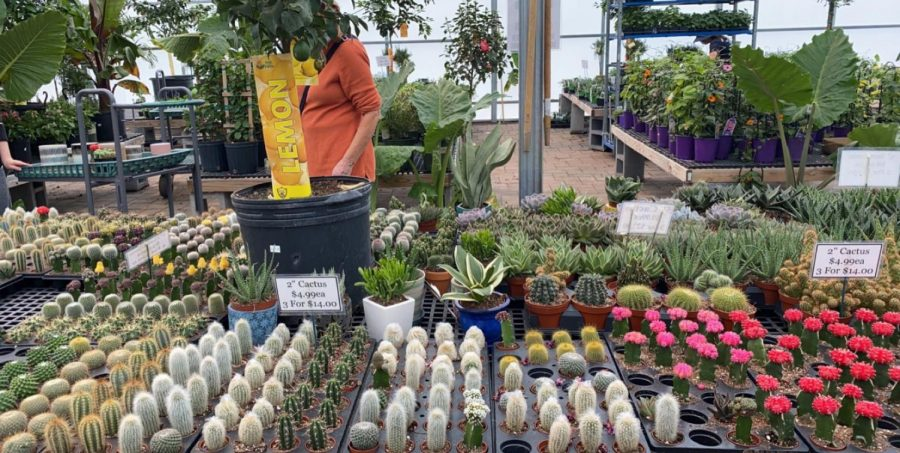 The collection of cacti and succulents located at Metropolitan Plant in Closter.